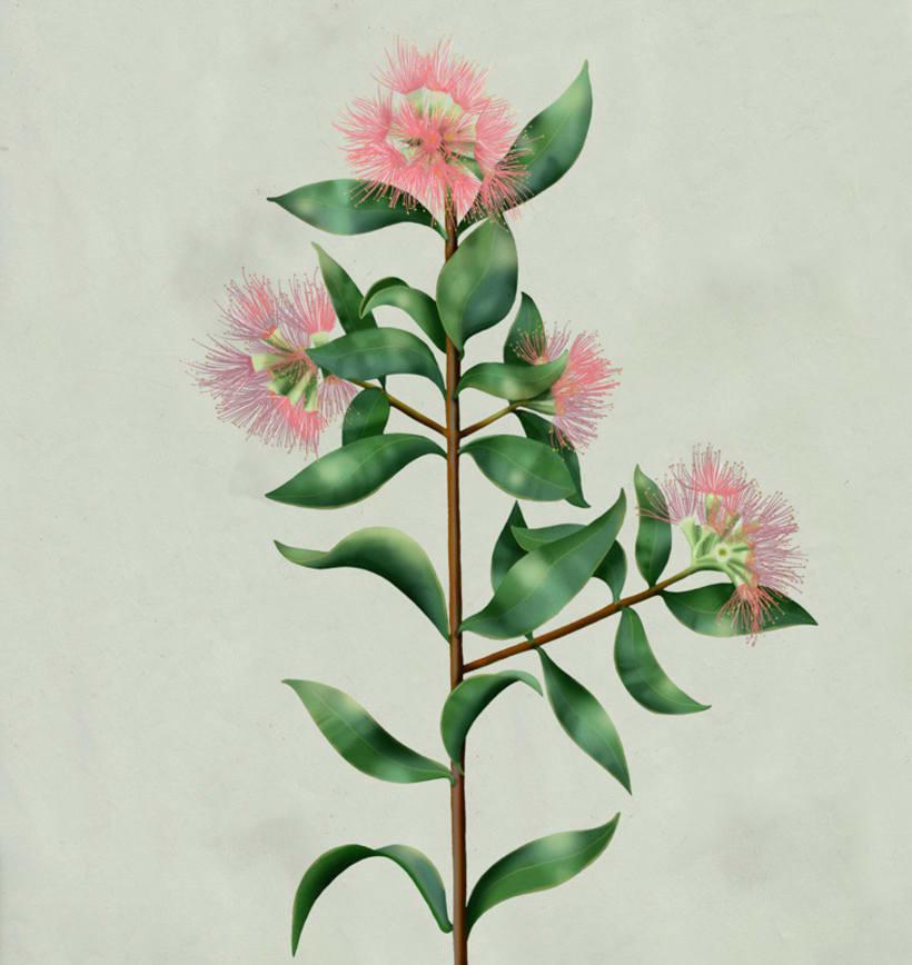 Botanical 12