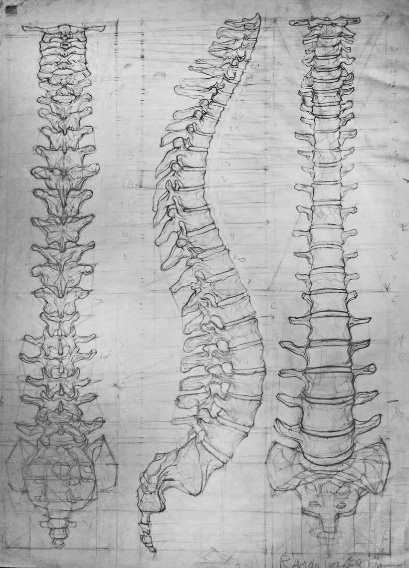 Anatomy - Human Skeleton 0