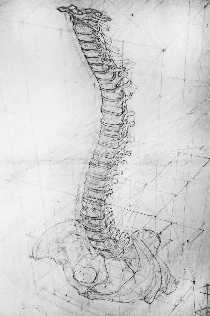 Anatomy - Human Skeleton 1