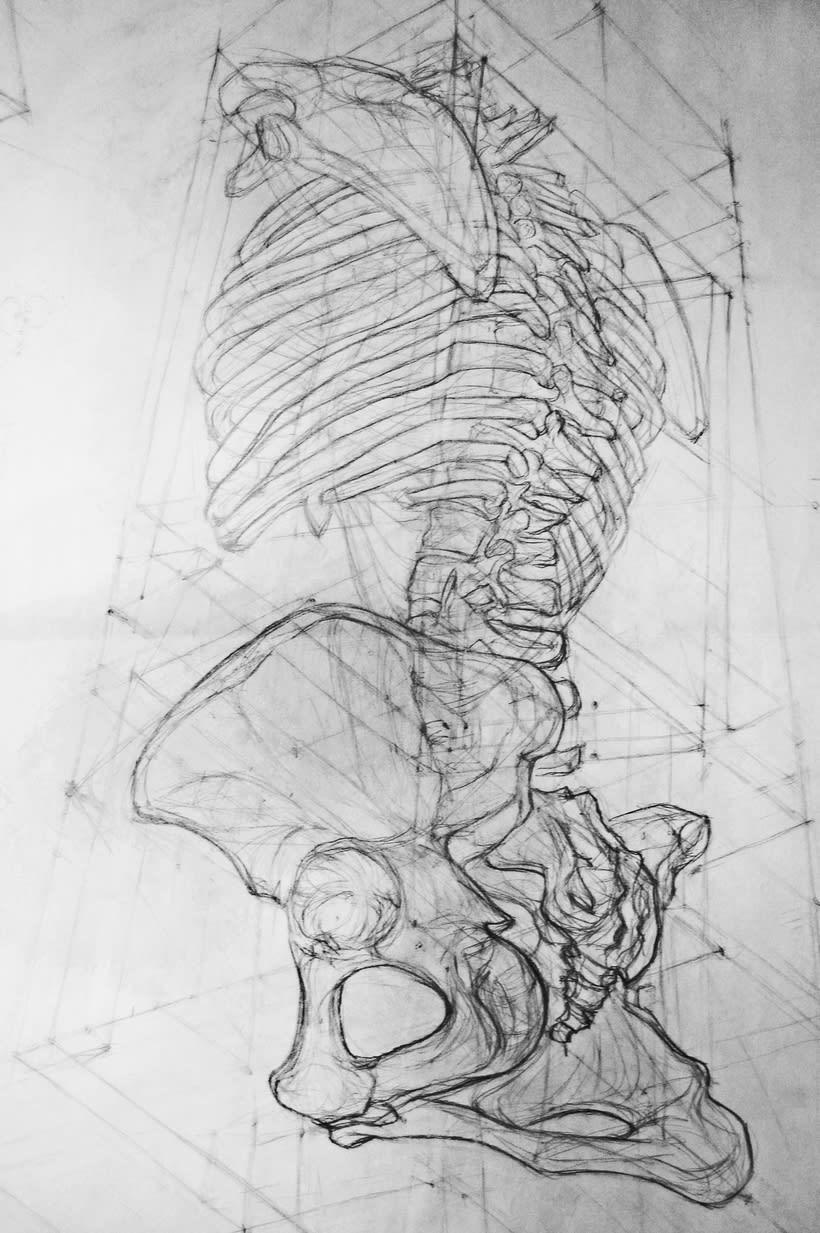 Anatomy - Human Skeleton 2