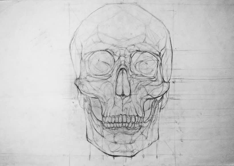 Anatomy - Human Skeleton 3