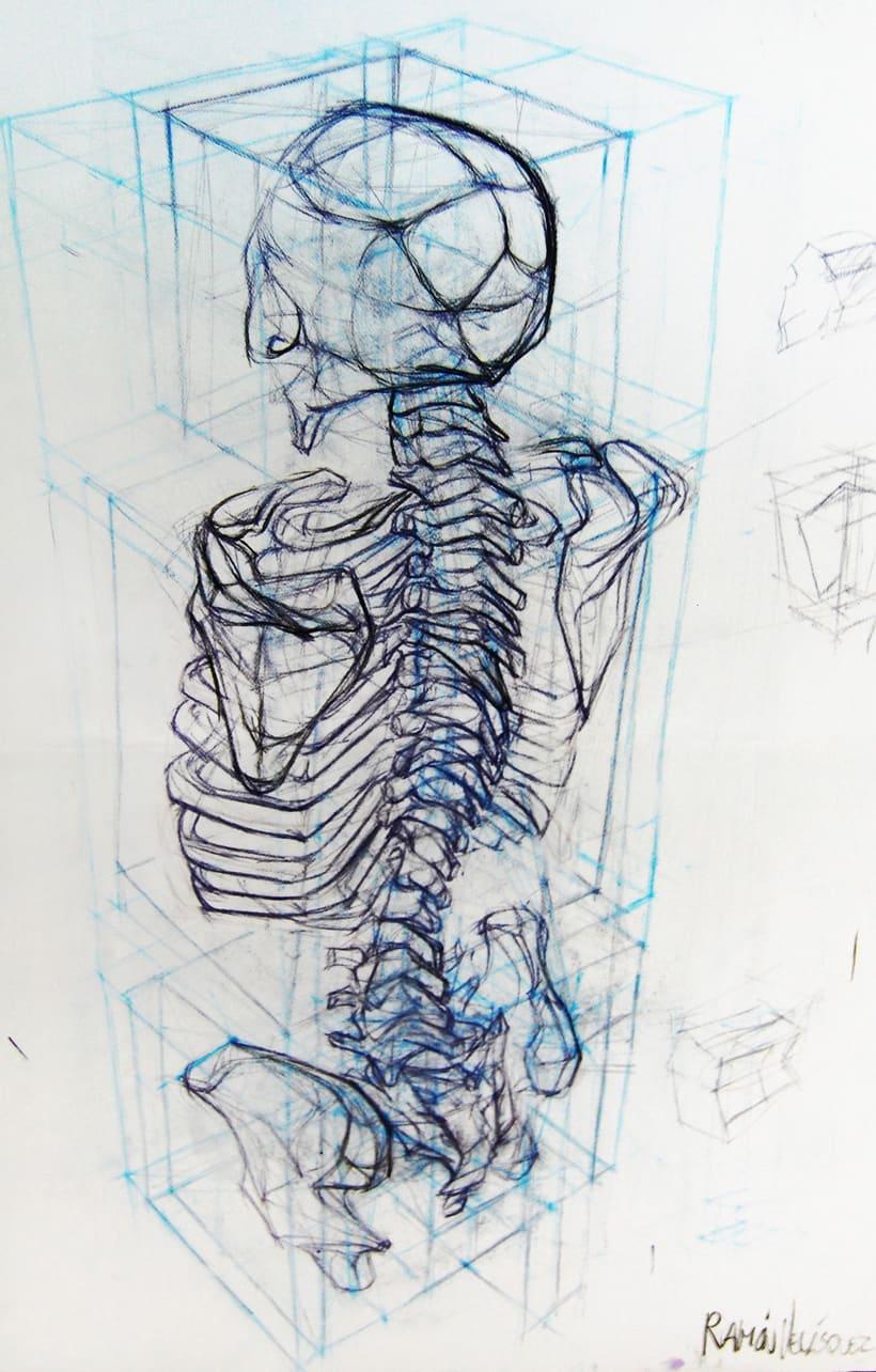 Anatomy - Human Skeleton 4