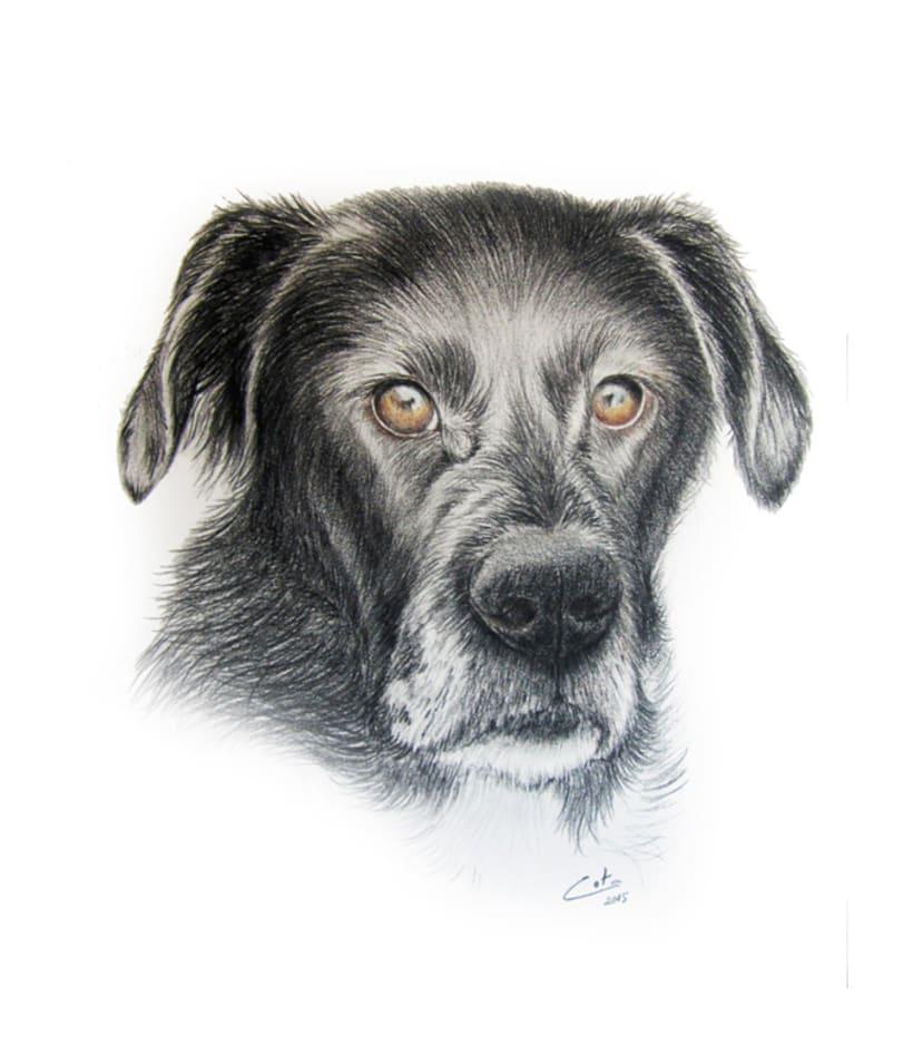 Ilustración animal 1