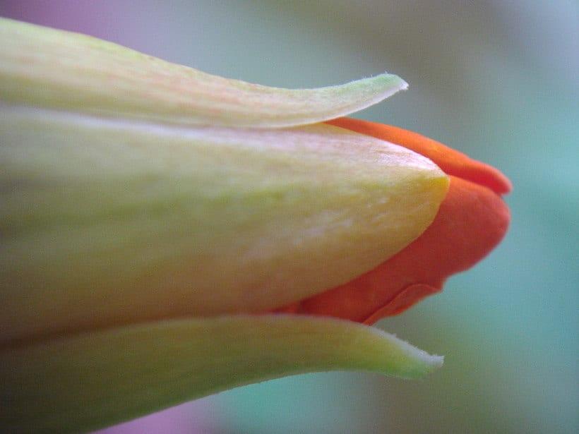Floral impressions 9