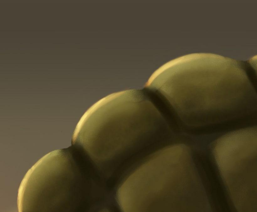 Tortoise Morla 2