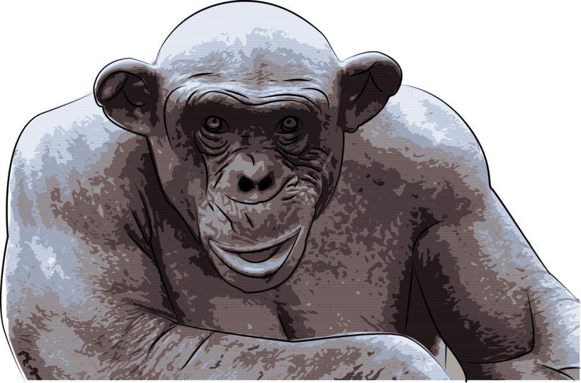 ASHES THE HAIRLESS CHIMP 0