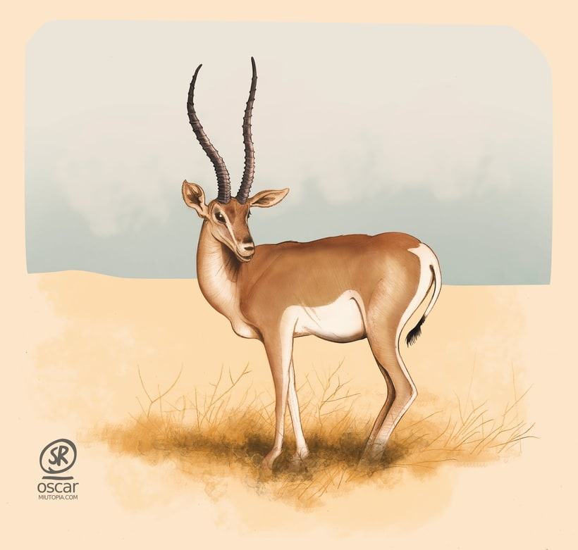 Gacela, ilustración para revista de naturaleza (lapiz, papel y Gimp) 0