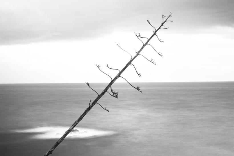 Simplicity Contrasted. Proyecto fotográfico 10