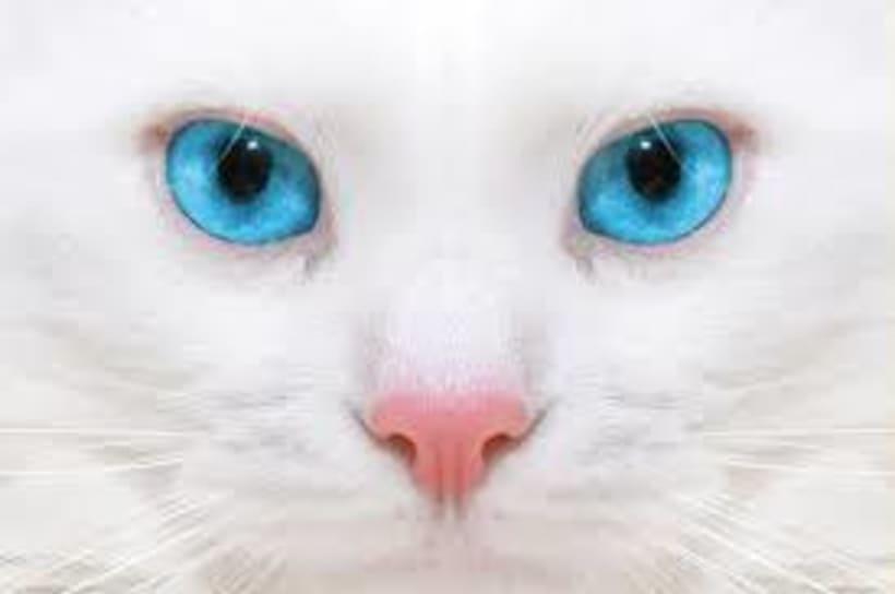 ojos de gato 3D -1