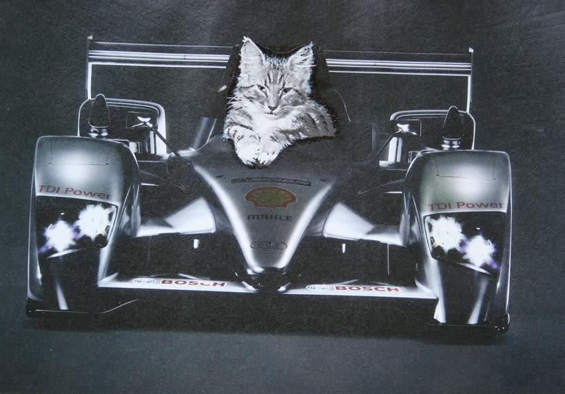 bloc de dibujo //  Gatos 5