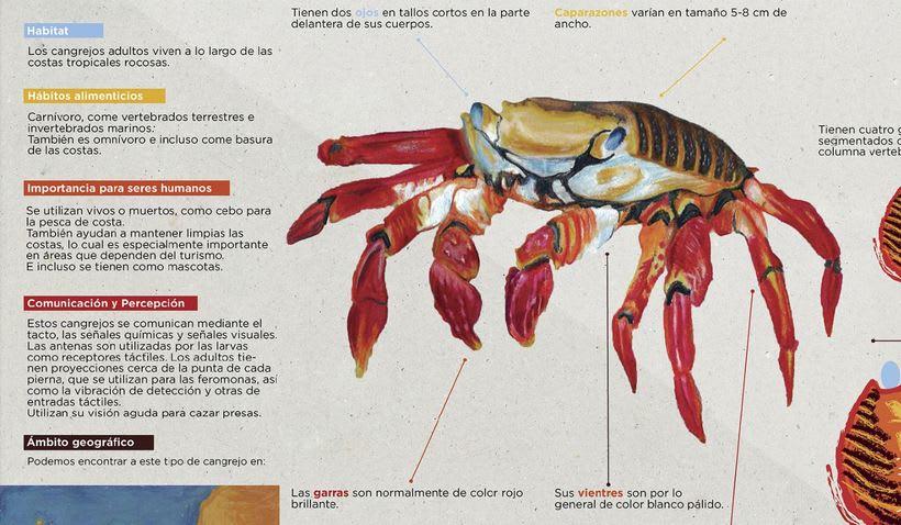 Infografía Cangrejo de las Islas Galápagos 2