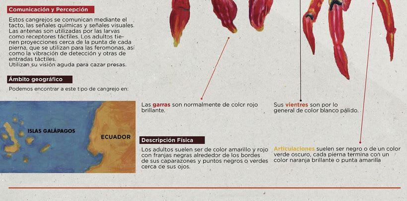 Infografía Cangrejo de las Islas Galápagos 3