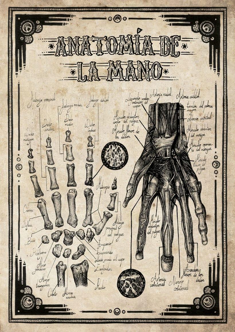 Ilustración científica 2 1