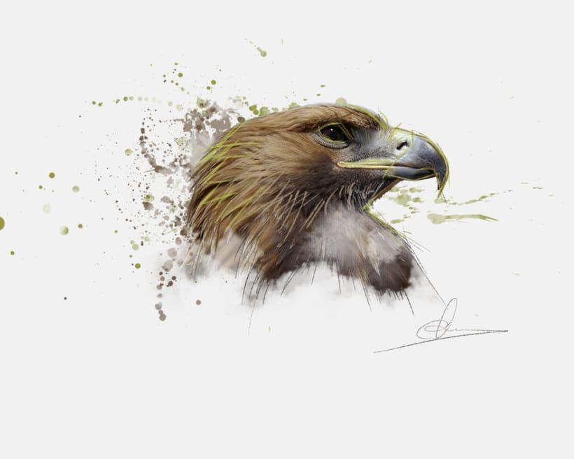 Ilustración - Águila 1