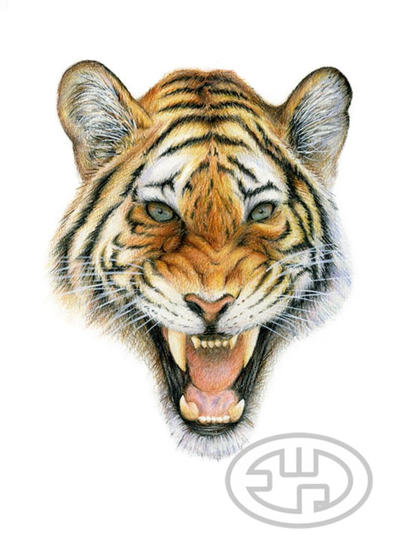 Tigre -1