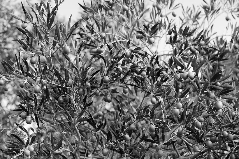 VERDE LUNA: Exposición fotográfica 7