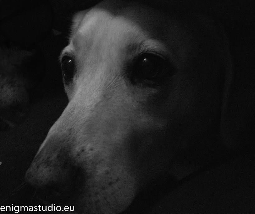 Mascotas 1