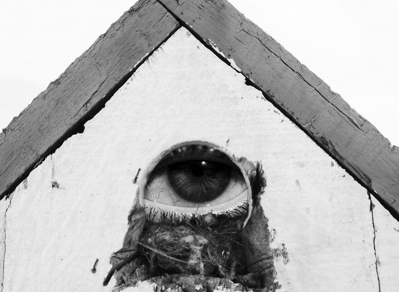 Refranes sobre moscas 9