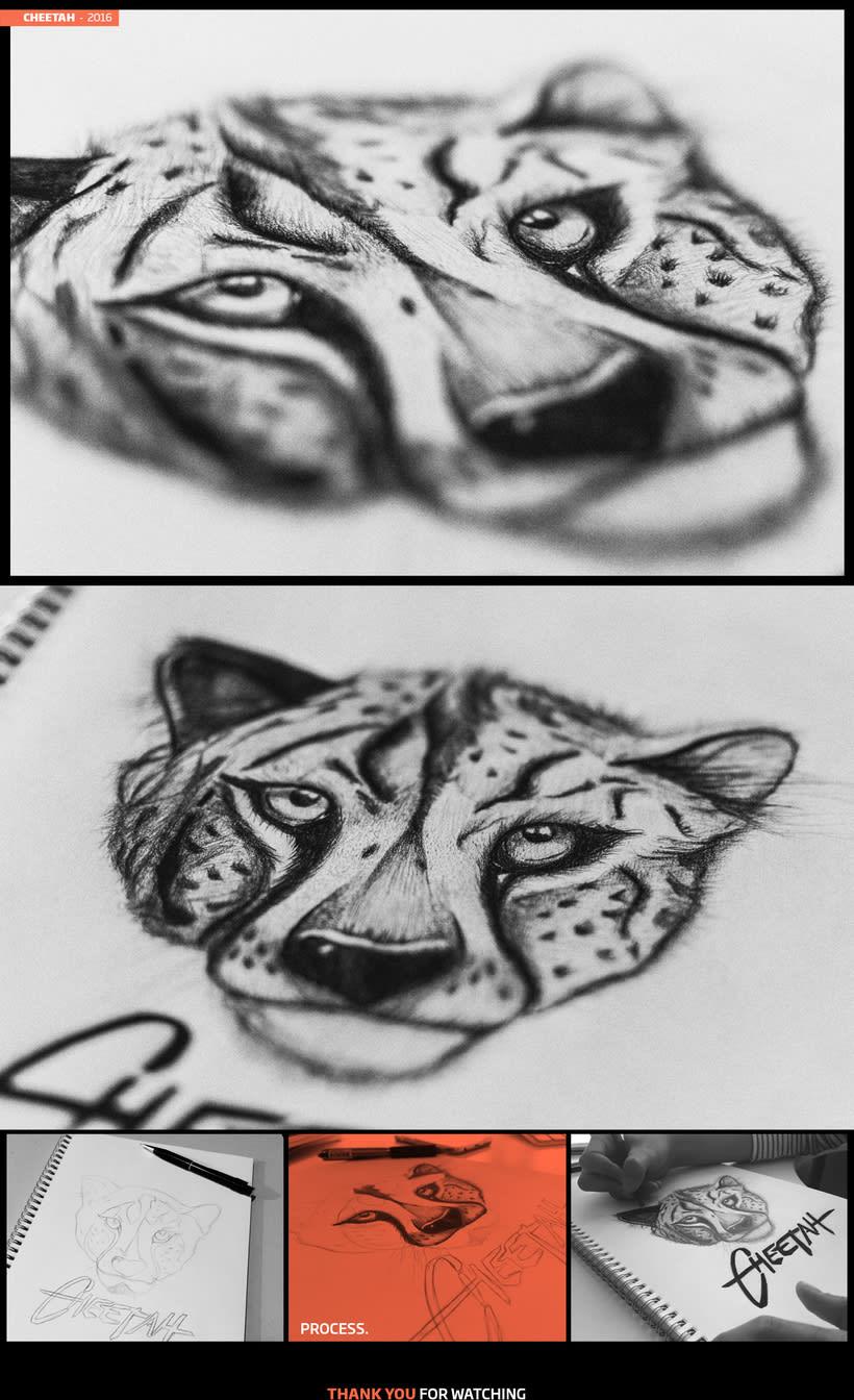 Cheetah - 2016 -1