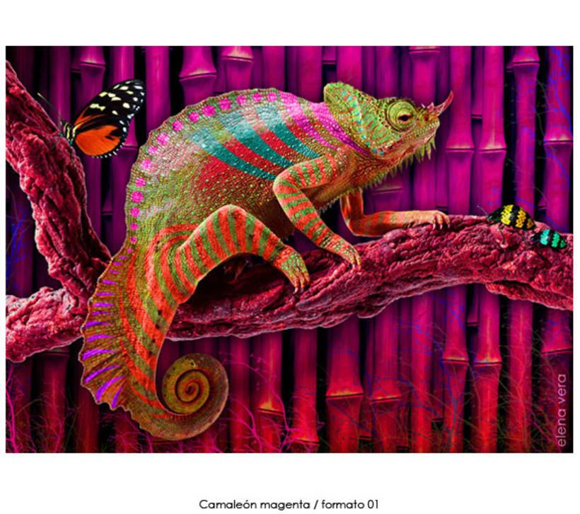 camaleones e insectos 5