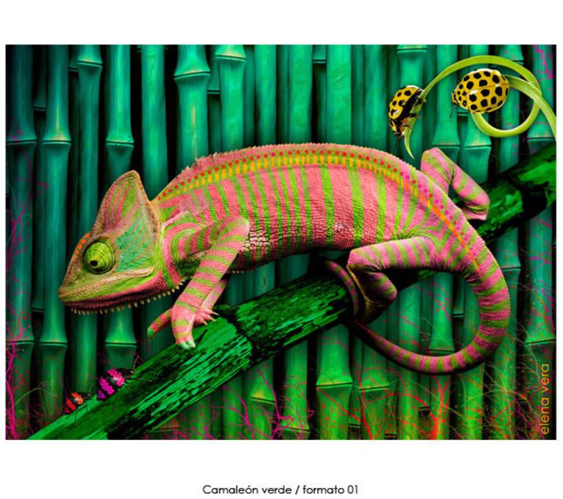 camaleones e insectos 2