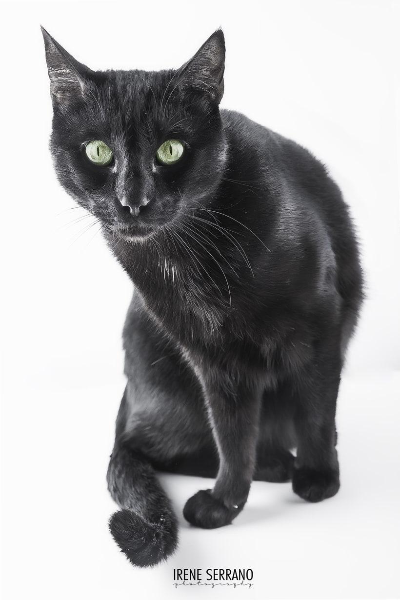 FOTOGRAFÍA DE MASCOTAS. Cats ^_^ 0