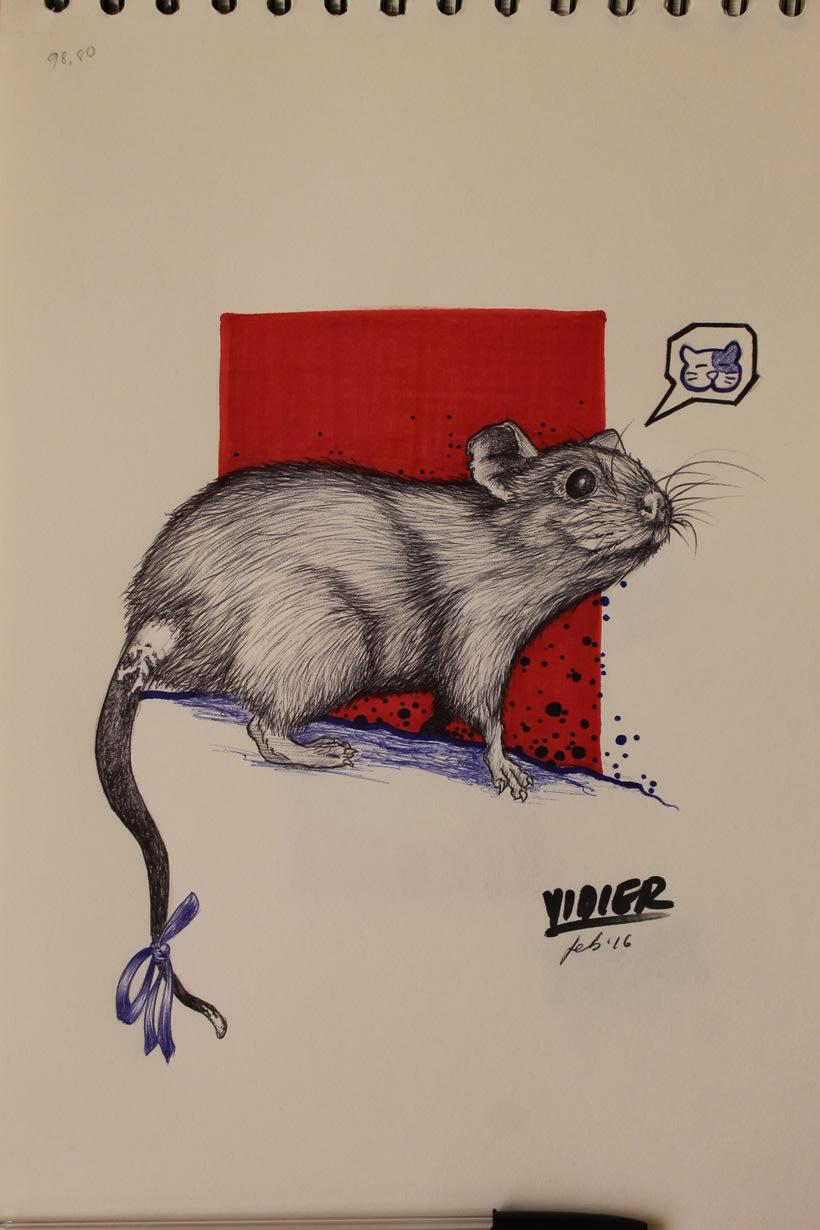 Rata gris -1