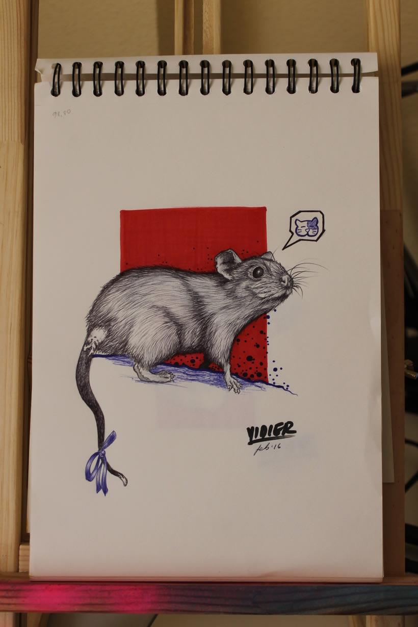 Rata gris 1
