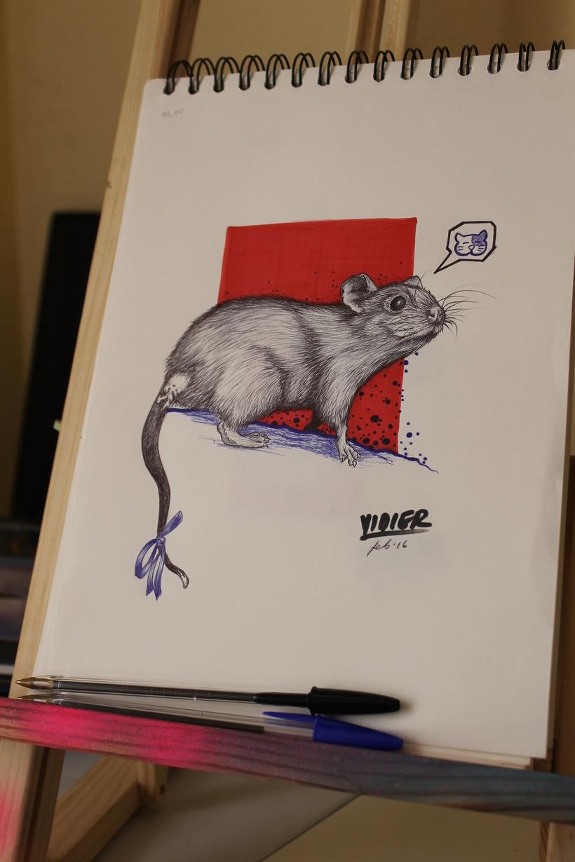 Rata gris 2