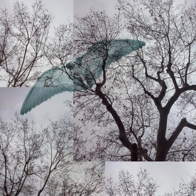 Exposición. Real surrea irreal. Los collages fotográficos de esta colección están formados por fotografías de paisajes y de diferentes elementos figurativos y texturas, que forman un conjunto donde transformo la realidad. Nuevo proyecto 6