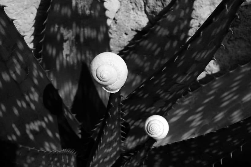 Composiciones orgánicas. Composiciones casi escultóricas, efímeras, inspiradas en las formas orgánicas de la naturaleza.  1