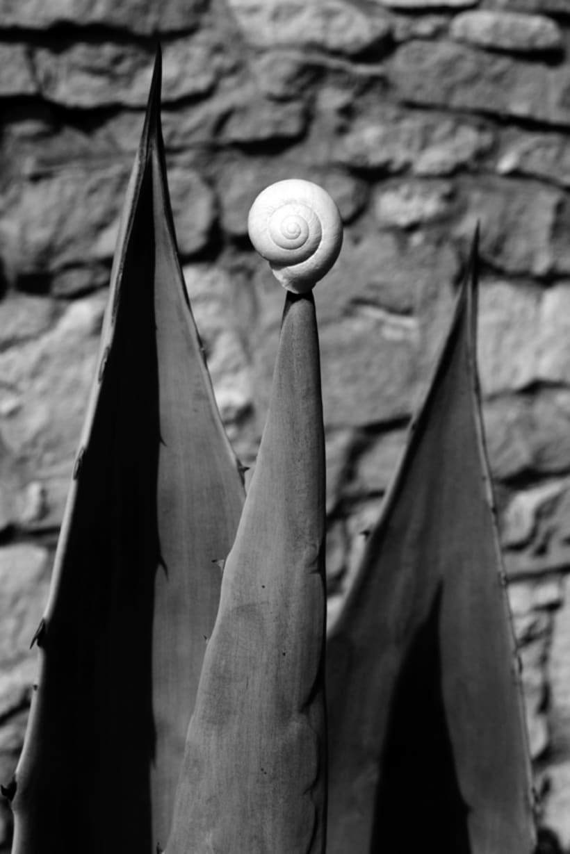 Composiciones orgánicas. Composiciones casi escultóricas, efímeras, inspiradas en las formas orgánicas de la naturaleza.  6