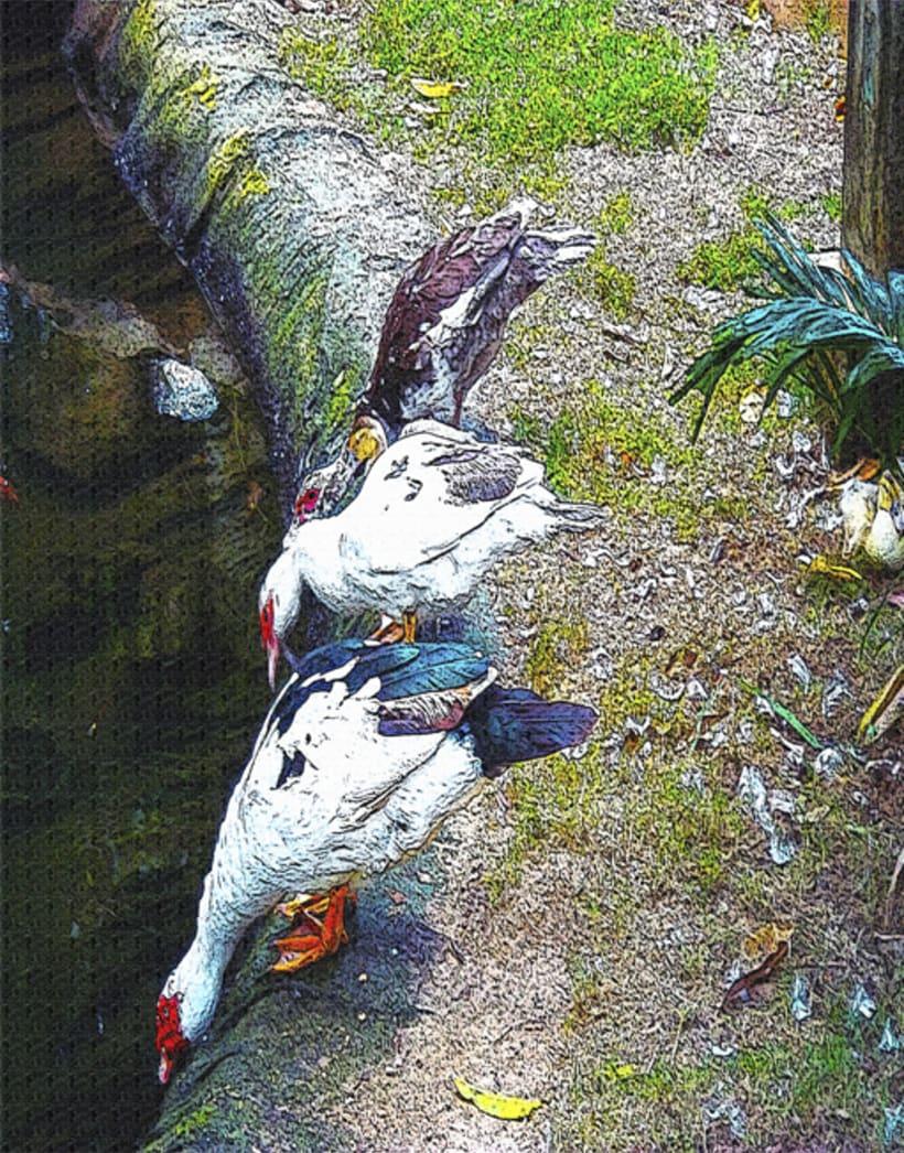 fotogrfias  de animales en tono de lienzo 4