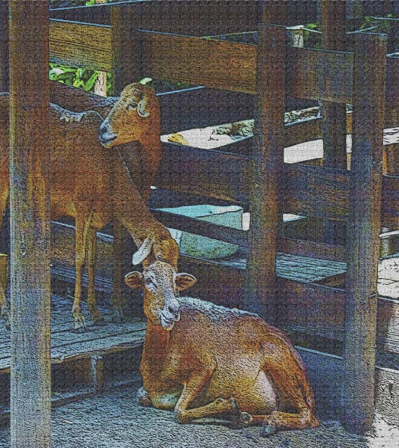 fotogrfias  de animales en tono de lienzo 7