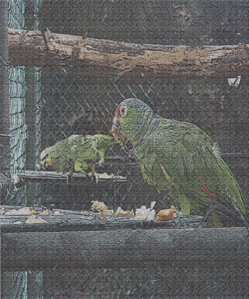 fotogrfias  de animales en tono de lienzo 8