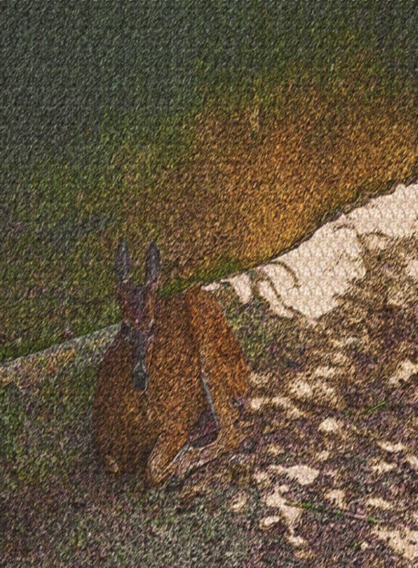 fotogrfias  de animales en tono de lienzo 9