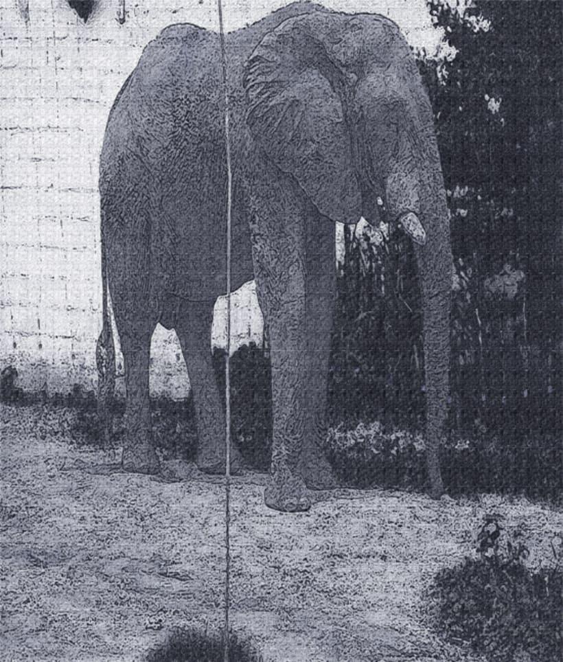 fotogrfias  de animales en tono de lienzo 10