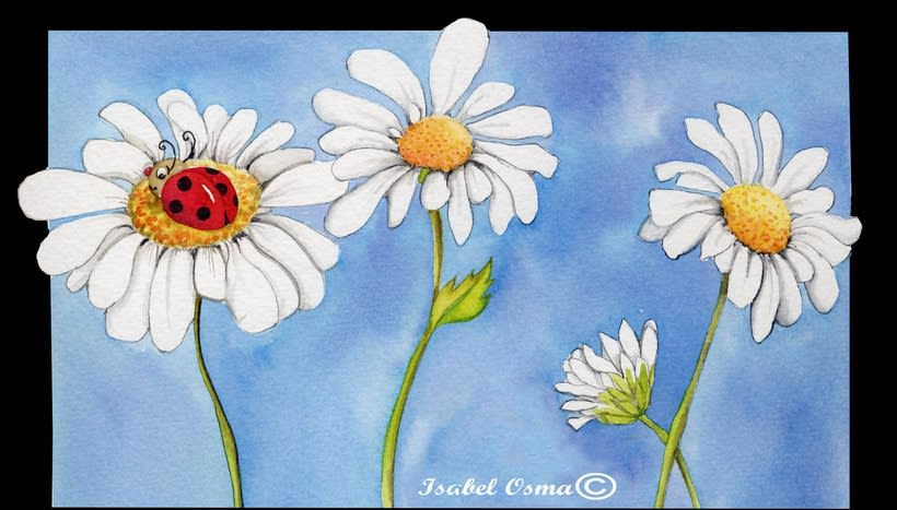 Mi flor , la margarita :) 0