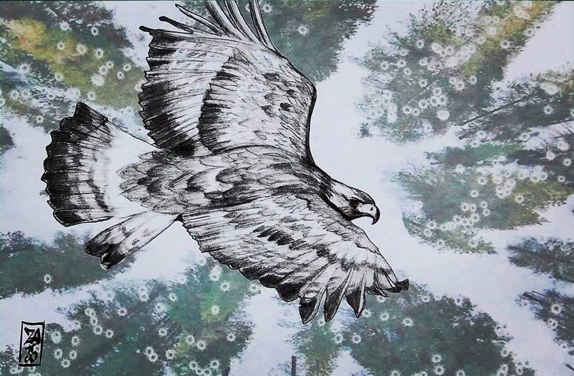 birds 19
