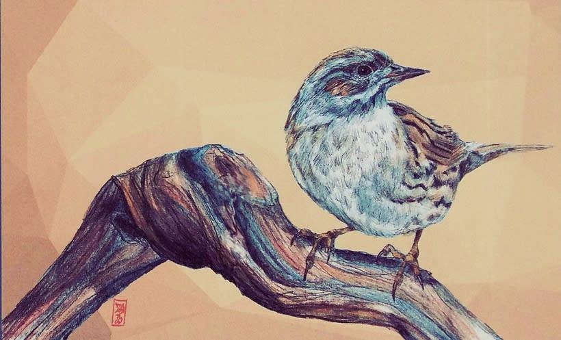 birds 20
