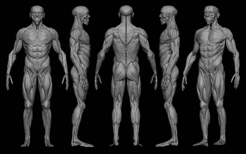 practice male ecorche in class zbrush 1