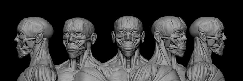practice male ecorche in class zbrush 2