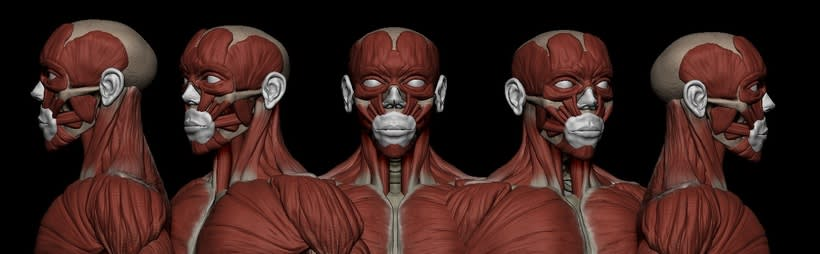 practice male ecorche in class zbrush 3