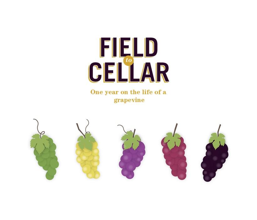 Field to cellar infográfico -1