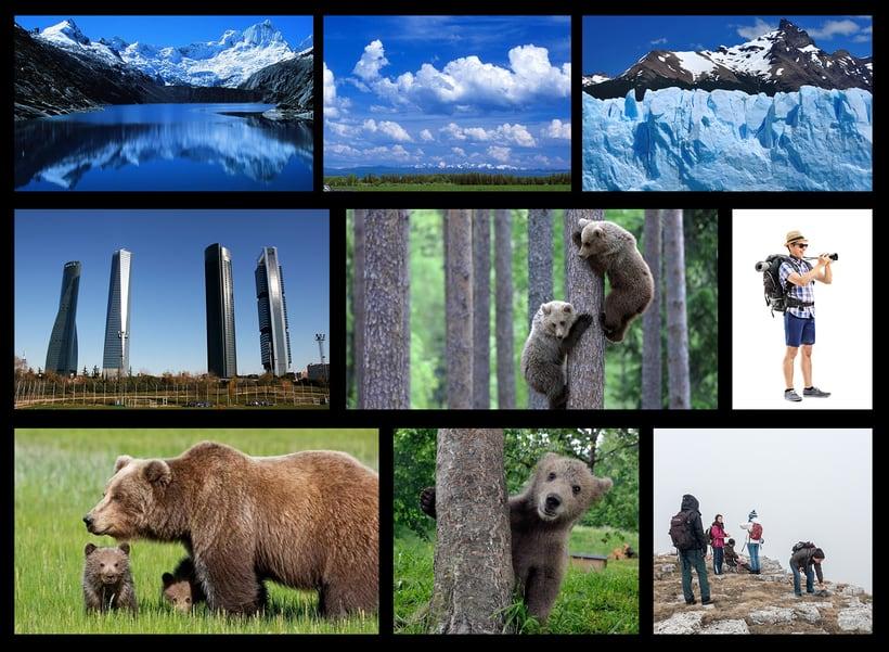 Ya hace tiempo que los osos no escalan madroños. 1