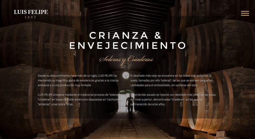 Brandy Luis Felipe. Diseño de Página Web 1