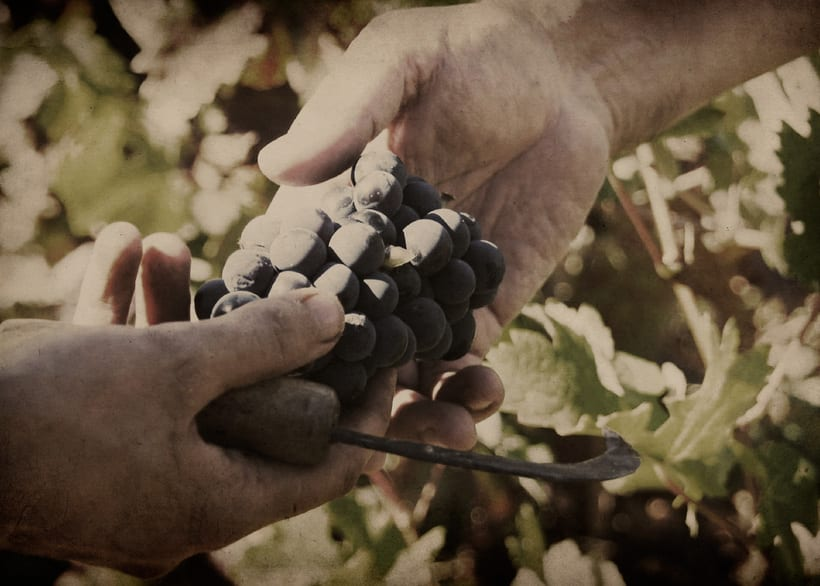 Wine Label Design: Viña Turquesa Crianza (Bodegas Pedro Moreno 1940) 19