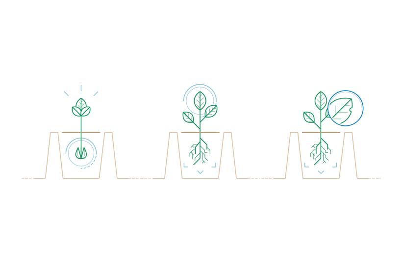 De la semilla al huerto / Ilustración para animación 3