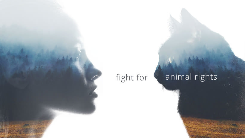 Fight for animal rights -1