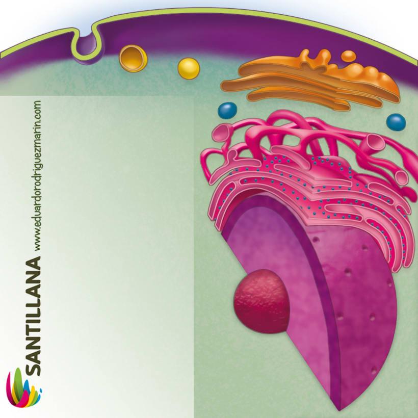 santillana 9